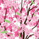 cherry blossom LiveWallpaper 5 icon