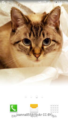 두리번두리번고양이배경