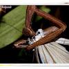 Mantis eating Common Wanderer