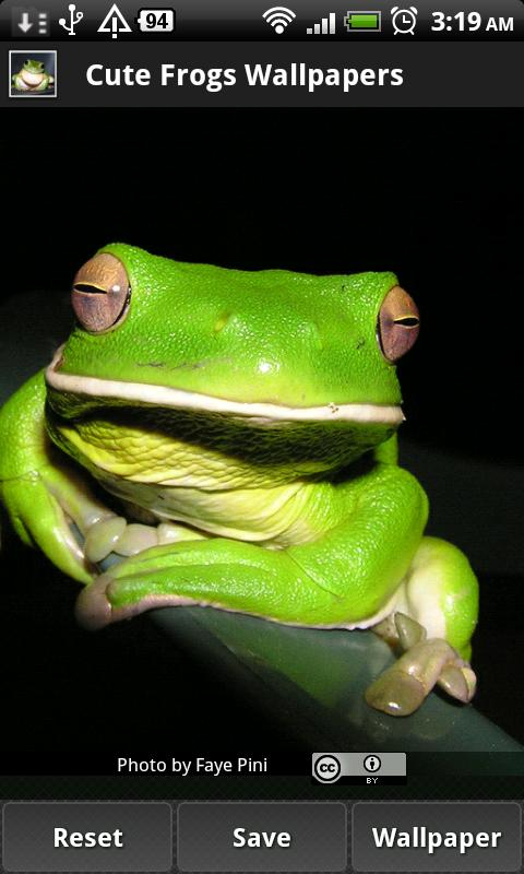 Cute Frog Wallpapers - screenshot