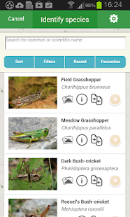 iRecord Grasshoppers- screenshot thumbnail