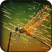Dragonflies Wallpapers