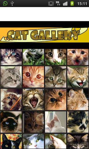 Cat Gallery