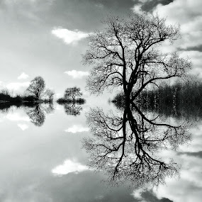 Pogledom by Andrea Šipuš - Black & White Landscapes
