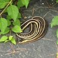 projcet snake