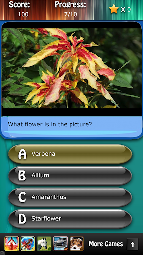 Flowers and Blossoms Quiz HD
