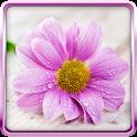 Gentle Flowers Live Wallpaper icon