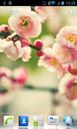 玩免費個人化APP 下載Flowers on the tree Wallpaper app不用錢 硬是要APP