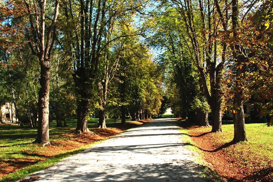 Park Novi Dvor by Ana Vuksan - City,  Street & Park  City Parks ( park, zagreb )