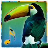 Bird Sounds - Ringtones
