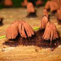 Chocolate Tube Slime