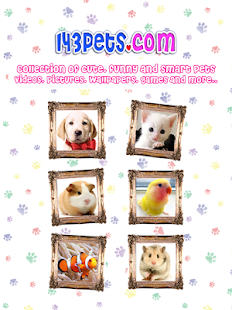 143pets Cute Videos- screenshot thumbnail