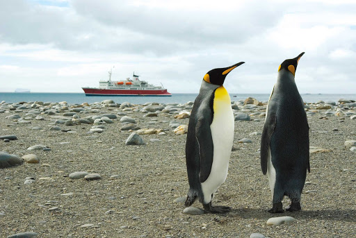 Antarctica-Expedition-Salisbury-Plains-Penguins - Two emperor penguins in Salisbury Plains, Antarctica, during a G Adventures expedition.
