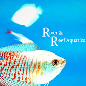 River And Reef Aquatics