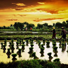 Planting Rice by Blue Bell Bantigue - Landscapes Sunsets & Sunrises