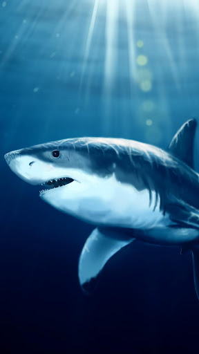 サメライブ壁紙