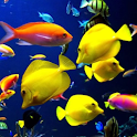 Coral Fishes Live Wallpaper logo