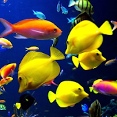 Coral Fishes Live Wallpaper