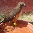 Aves de Mexico