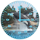 Killer Whale 2 Analog Clock