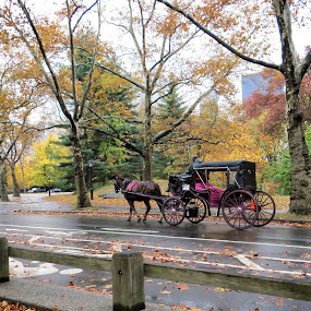 Horse and Carriage by Sue Green - City,  Street & Park  City Parks ( seasons, street, fall, ny. horse, central park,  )