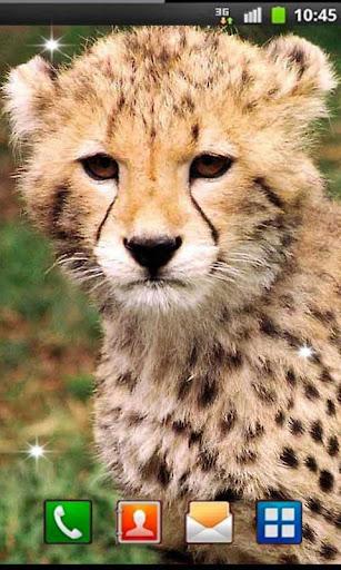 Leopard Sounds live wallpaper