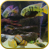 Fish Tank Live Wallpaper Android APK Download Free By Ezzardel