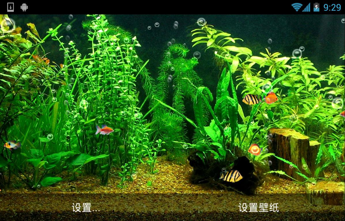 Fish aquarium live wallpaper - Fishbowl Hd Live Wallpaper Screenshot