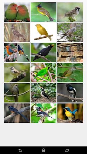 Bird Song Pro