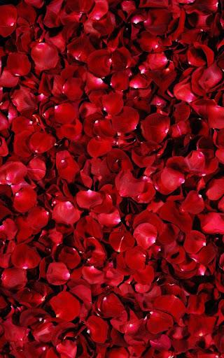 花弁は壁紙を生きる