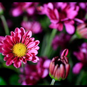 The Flower(s) by Nugroho Kristanto - Flowers Flower Arangements ( flowers, flower )