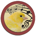 Singer Canary Tutor icon