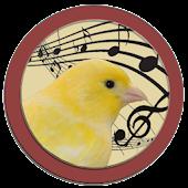 Singer Canary Tutor