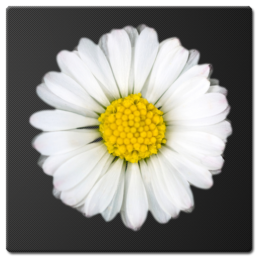 Daisy Battery Widget APK Cracked Download