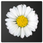 Daisy Battery Widget icon