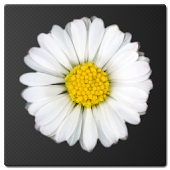 Daisy Battery Widget