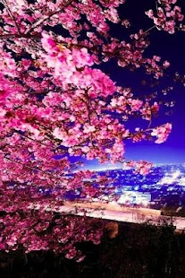 3D Sakura Live Wallpaper HD - screenshot thumbnail