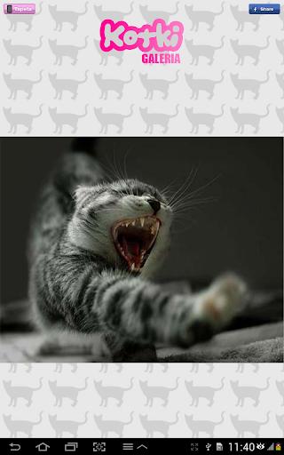 玩免費攝影APP|下載猫 app不用錢|硬是要APP