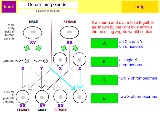 sorting-out-male-and-female-sperm