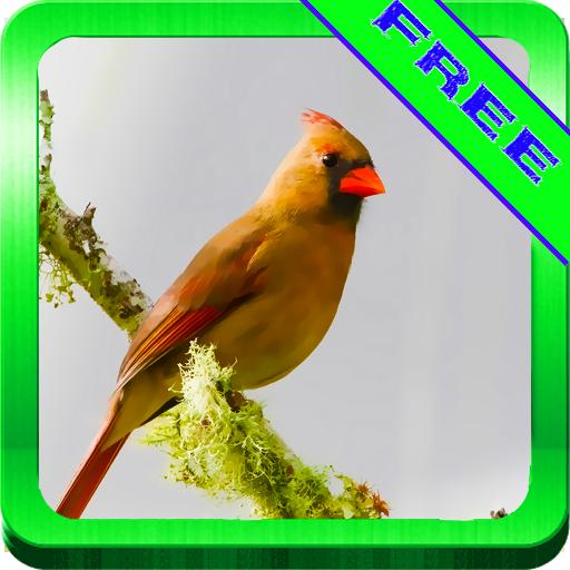 鸟儿歌唱的声音Ontspanne 娛樂 App LOGO-APP開箱王