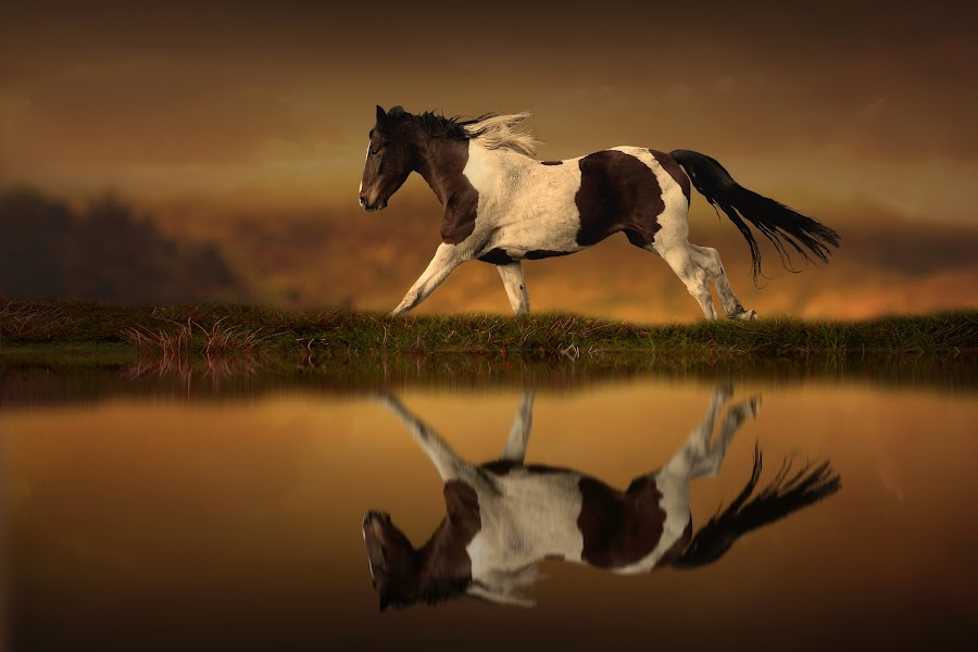 The Horse's Journey by Jennifer Woodward - Digital Art Animals ( water, animals, nature, horses, horse, reflections, landscape )