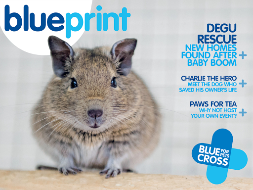 Blueprint by Blue Cross