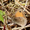 Small Heath, nêspera