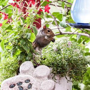 squirl..pixoto.jpg