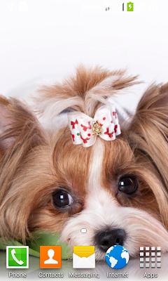 Cute Puppy Live Wallpaper - screenshot