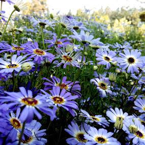 Garden Flowers by Vaibhav Nahar - Flowers Flower Gardens