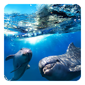Dolphin 3D Live Wallpaper icon