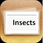 Insects Flashcards Plus icon