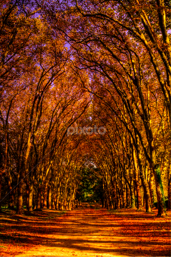 by Alexandre Soares - Nature Up Close Trees & Bushes ( dramatic landscapes, nature, color, colorful, fall, landscapes )