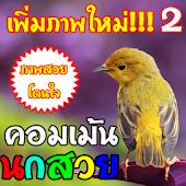 คอมเม้น นกสวยงาม มาใหม่!!!